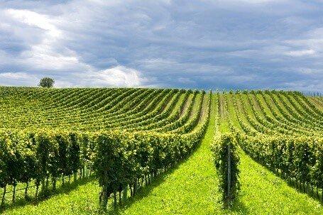 Поиск сезонной работы в Италии