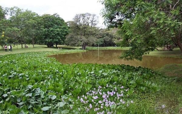 Ботанический сад в Асунсьоне