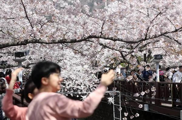 Средняя зарплата в Южной Корее в разных сферах