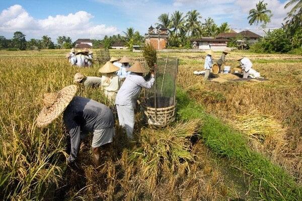 Работники на Бали