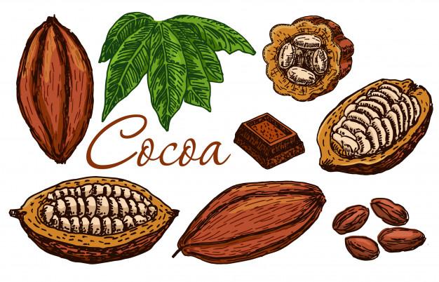ТОП-10 стран по производству какао