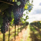 Какие страны являются крупнейшими производителями вина: ТОП-5